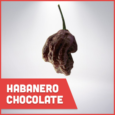 habenero chocolate